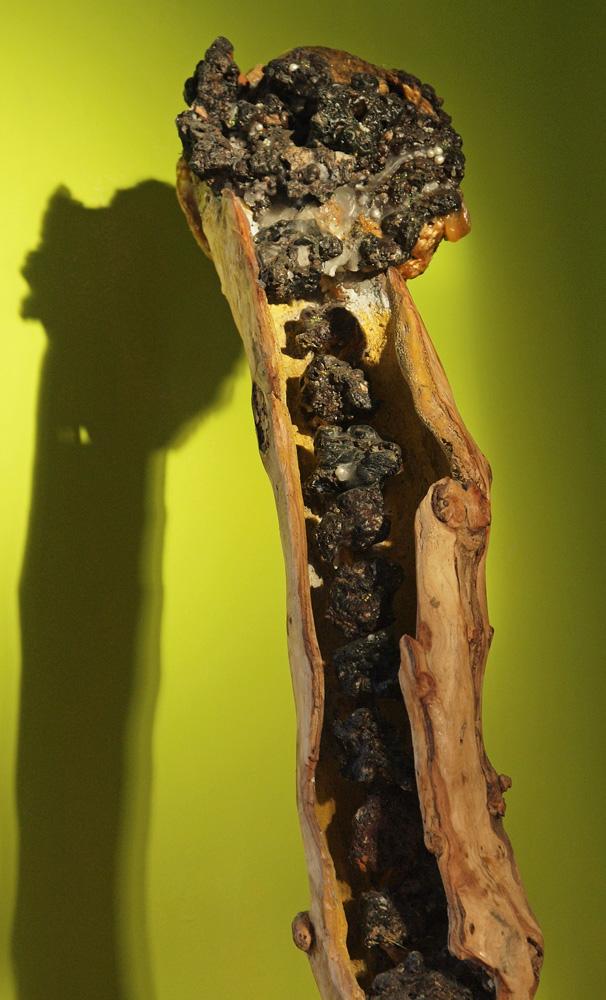 ruggenraat drijfhout