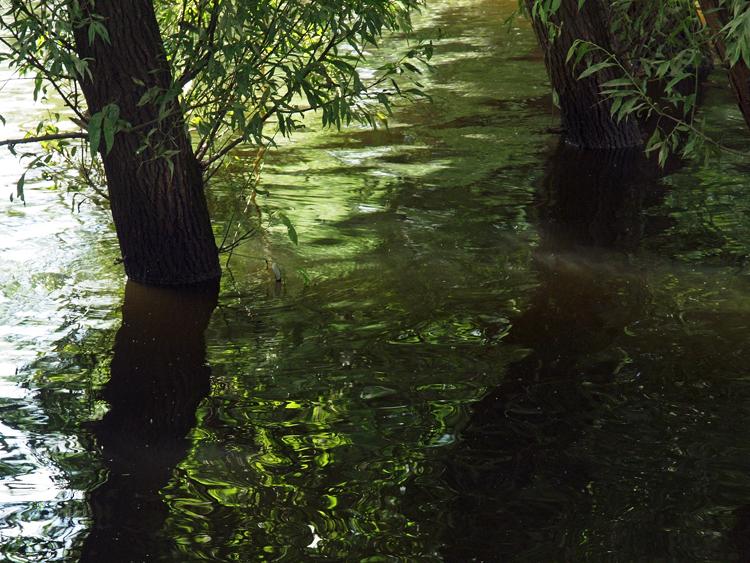 wilgen in water